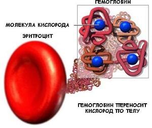 Гемоглобин человека и его структура