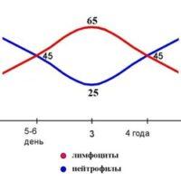 Первый и второй физиологический перекрест в лейкоформуле у детей