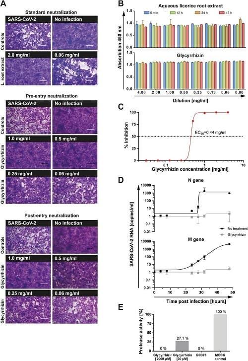 Противовирусная эффективность глицирризина при репликации SARS-CoV-2 in vitro