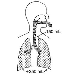Мертвое пространство легких и его значение в процессе дыхания