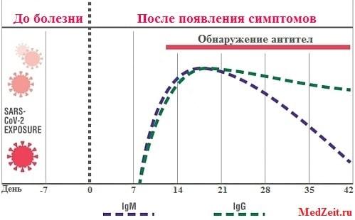 Сколько дней антитела к коронавирусу определяются в крови